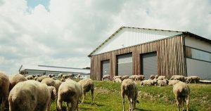 Wool sheds